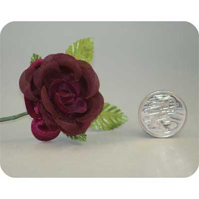 Burgundy Open Rose